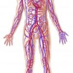 Sundhed, hjerte-kar, blodtryk, kolesterol